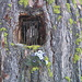 Nicchia votiva in un tronco