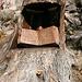 brani del vangelo incastonato nel tronco