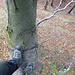 Blick von oben auf das Fixseil und das in den Hang geschlagene Weglein