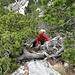 [u Lena] im obersten Teil des Legföhrenbereichs in der wurzligen Kletterstelle. Der Föhnsturm tobt nun unbarmherzig.