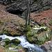 Brüeltobel: Ein Bachlauf hat sich unter den Felsen durchgefressen.