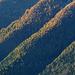 Herbstwälder über dem Iseltal.