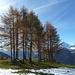 Die Gegend des Glanzer Bergs ist oft von lockeren Baumgruppen bestanden.