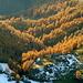 Leuchtende Herbstwälder bei der Äußeren Steiner Alm.