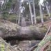 unser Ausflug beim Anstieg in die Tobel, der vermeintlichen Abkürzung, zu steil und felsdurchsetzt