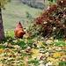 ..umgeben von hübschen Hühnern und.....