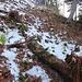 Steiler Abstieg von Mittelberg gegen Nordwesten, direkt zur Chrinn.