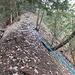 Rellsten-Sporn. In diesem Abschnitt übel-rutschige Wurzeln.