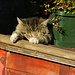 Da hat sogar der Antikatzenfreund ein Foto gemacht