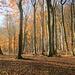 Im Aufstieg zur Olegge wechseln die Bilder sich ab : Sonnendurchfluteter Buchenwald.