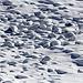 """Wie [u Alpin_Rise] treffend [http://www.hikr.org/gallery/photo962406.html#c139296 sagte]: <i>""""Zu wenig Schnee die Steine adäquat zu polstern</i>"""", aber durchaus hübsch anzuschauen"""