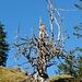toter Baum, auch schön