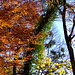 Herbstliches Feuerwerk der Farben