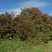 der Herbst macht sich bemerkbar (Norbertshöhe)