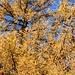 Goldene Herbstfarben