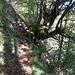 <b>Über eine Baumschwelle in den Wald  ♬♫♬ Histoire Naturelle ♬♫♬ [https://www.youtube.com/watch?v=L8KaZA2-NEI] _____ __<b></b></b>
