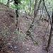Dieser Geländerücken führt hinab zu P.509  ♫♬♫ When The Leaves Come Falling Down ♬♫♬ [http://www.youtube.com/watch?v=fNCCA6rWFJ0] _____ ___