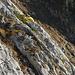 die vor ein paar Bildern erwähnte Seilschaft in der Südwand vom Stoss