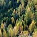 Herbstwald am Fuß des Teischnitztals.