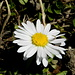 Sobald die Sonne wärmt, erscheinen auch schon Blumen...