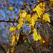 Meraviglie d'autunno