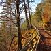 im Abstieg von der Vorderkaiserfeldenhütte - eines der wenigen ebenen Wegstücke