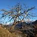 Auch ein toter Baum ist sehenswert