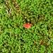 Piccolo fungo nel muschio