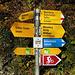 Der Ausgangspunkt. Das Ziel ist klar - die Routen zum Gonzen scheiden sich etwas später - dort geht man auf dem 'Leiterweg' weiter.