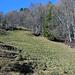 Am Waldrand der Anfang des endlosen Steinmäuerchens. Hier den Weg verlassen und weglos dem Mäuerchen entlang nach oben steigen.