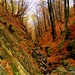 ruga del bosco