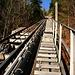 Das über 60% steile Trassee der Harderbahn auf ca. 1050 m Höhe.