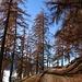 Herbstliche Stimmung im Bleikiwald mit dem Wegweiser auf Pt. 947.