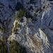 Aufstieg Simmenfluh, Weiterweg von Wäldchen zu Wäldchen, Adlerhorst oberhalb der Bildmitte etwas links