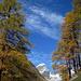 Herbstliches Val Tuoi: Piz Buin mit Lärchengold I