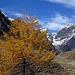 Herbstliches Val Tuoi: Piz Buin mit Lärchengold II