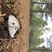 Pilze sprießen zurzeit heftig