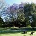 nicht nur die Gartenanlage, auch die prächtigen, grossen und jetzt blütenreichen Bäume entzücken