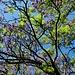 malerisches Blätter-Blüten-Dach