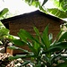 einfachste Behausungen: Aufbau mit Hölzern und gerocknetem Mist