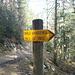 anstelle der Kiesstrasse führt auch ein lauschiger Waldweg Richtung Aufiberg
