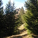 Unser Gipfelziel ganz romantisch zwischen den Bäumen