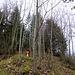 Auf schmalem Pfad aufwärts durch den Wald