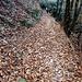 Sul sentiero per Morcote