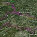 Upgrade zur beschriebenen Tour: Marathon-Trail durch die Sierra Almijara