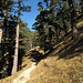 Der schön angelegte Weg zur Stepbergalm durch lichten Wald