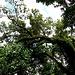 der Gang durch den Regenwald beginnt - nach dem Gate zum Park