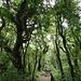 unter der Wolkendecke schreiten wir im Regenwald dahin ...