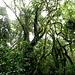 faszinierender Regenwald ...