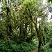 lange wandern wir durch das üppige Grün ...